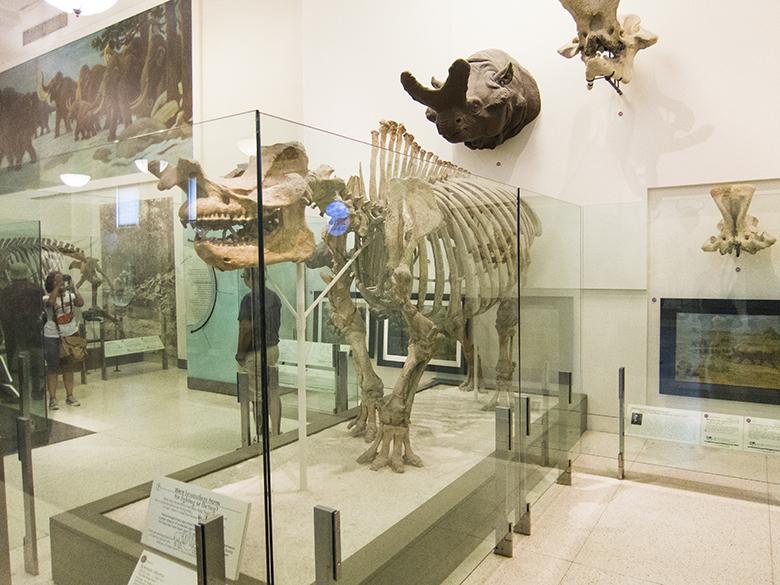 Natural-History-Dinosaur