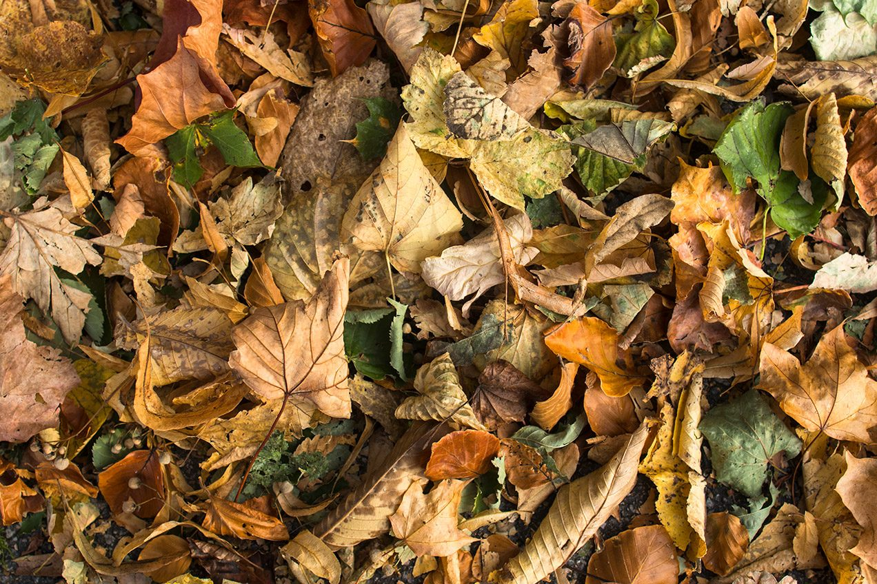 Photo of dry and yellowing autumn leaves on the ground