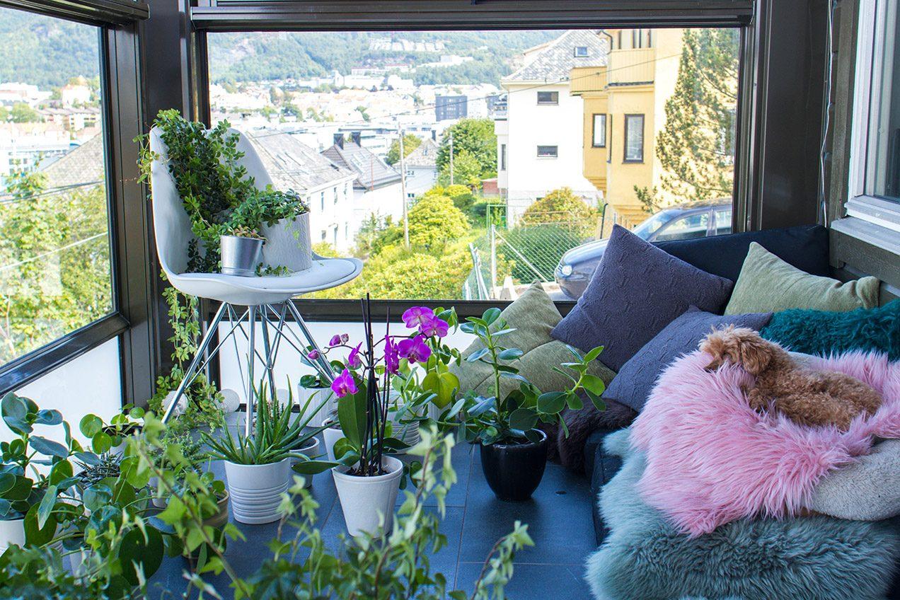 Toy poodle sleeping among green indoor plants